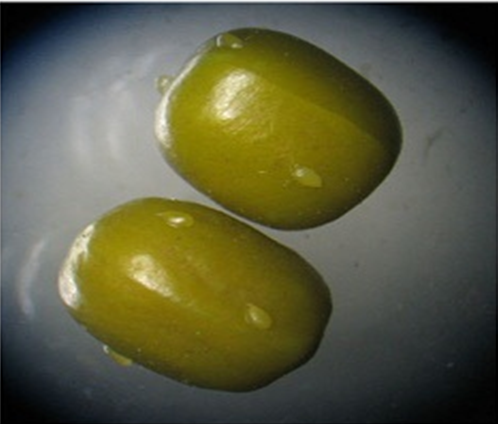 Young eggs laid on the surface of the seed.