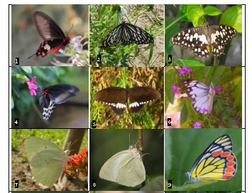 Images of the butterflies found in Chuadanga District (see Table 1 for corresponding names)