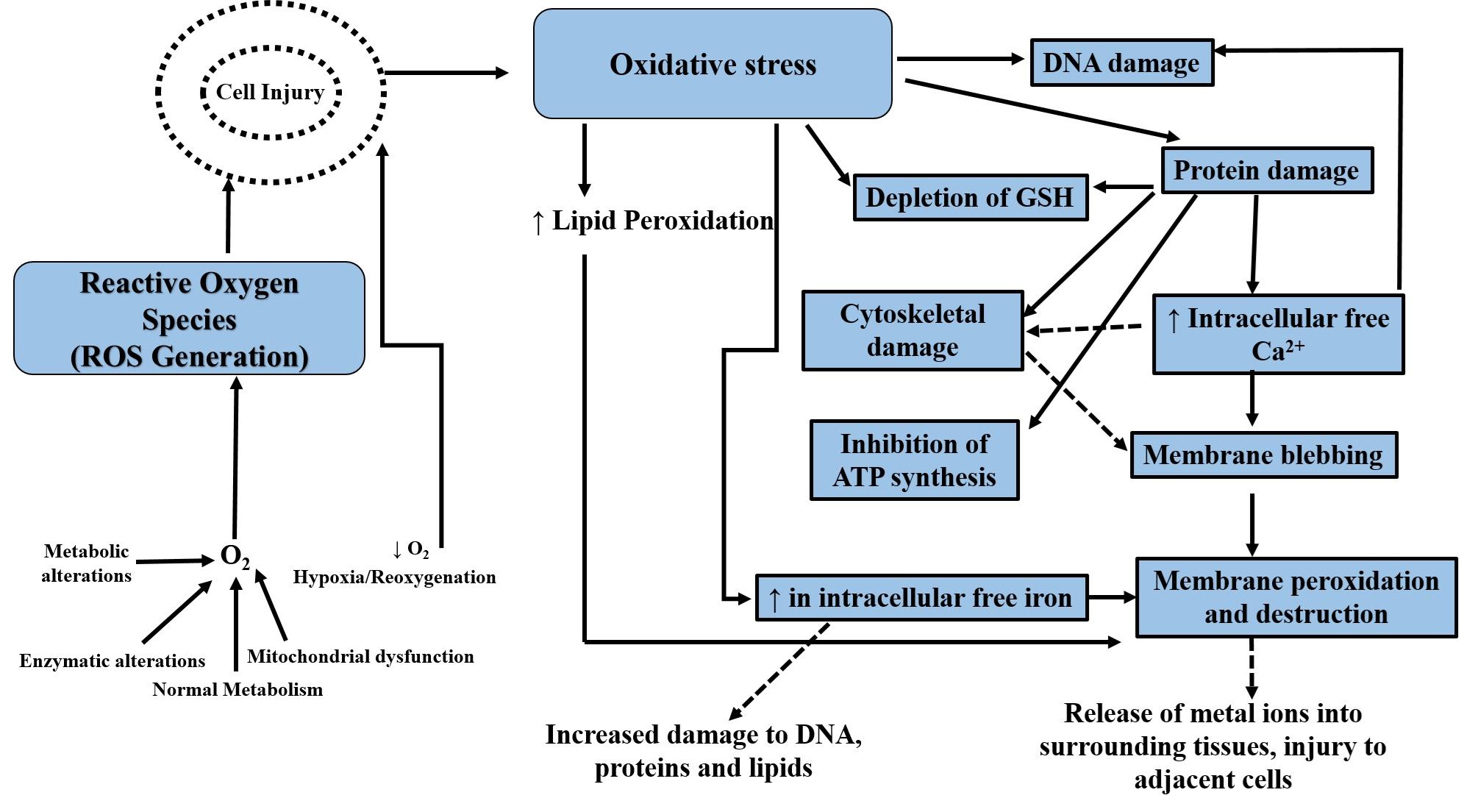 Mechanism of Oxidative cellular damage induced by pesticide
