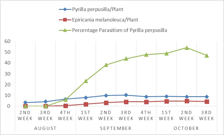 A graphical presentation of date wise fluctuation in the population of Pyrilla perpusilla, Epiricania melanoleuca and percentage parasitism of Pyrilla perpusilla on sorghum