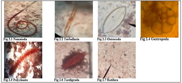 Meiofaunal Organisms in Songculan Lagoon, Songculan Dauis Bohol Philippines.