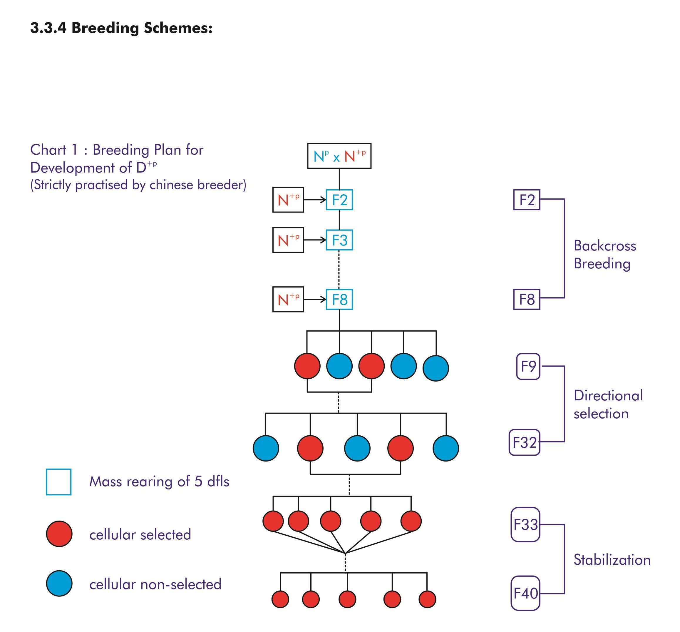 breeding scheme