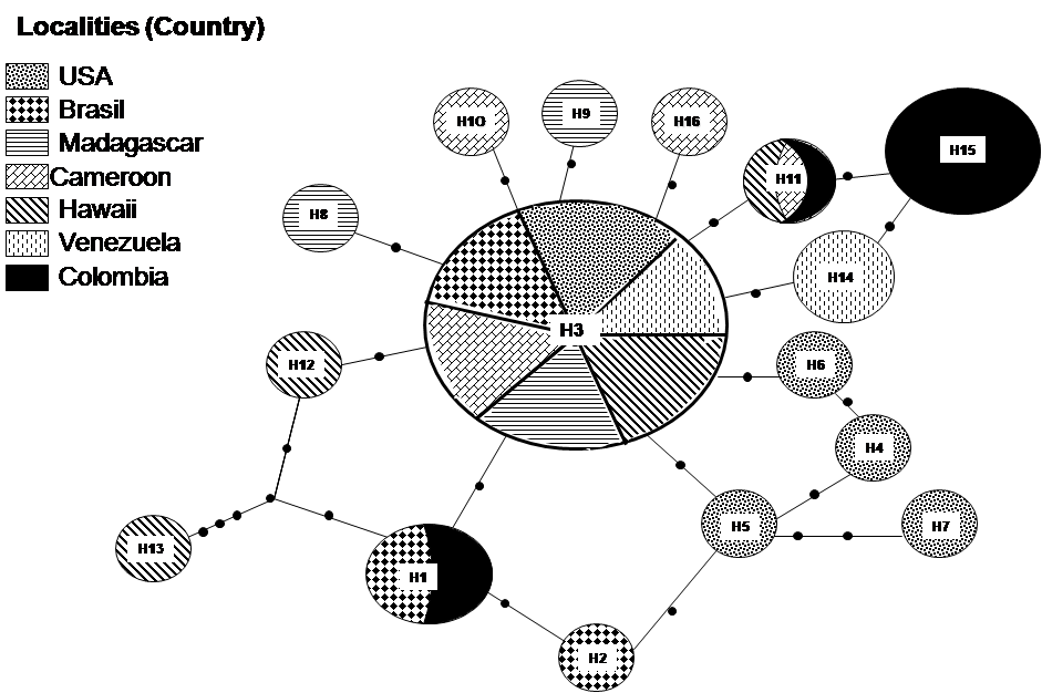 Haplotypes Network (TCS) among mitochondrial ND5 haplotypes. Each black dot indicates a single substitution. The numbers inside the circle indicate the Haplotype number (Tables 2 and 3). The size of the circle is proportional to the haplotype frequency only for the Venezuelan and Colombian populations.