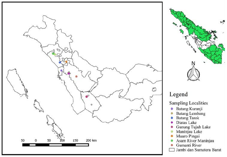 Sampling localities of Puntius cf. binotatus in Gunung Tujuh Lake and Puntius binotatus eight populations in other locations in West Sumatra