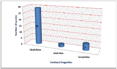 Chart showing family wise distribution of number of dragonflies at USTM campus.